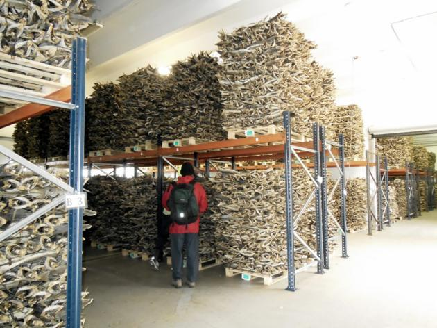 Grade A Quality Dried StockFish