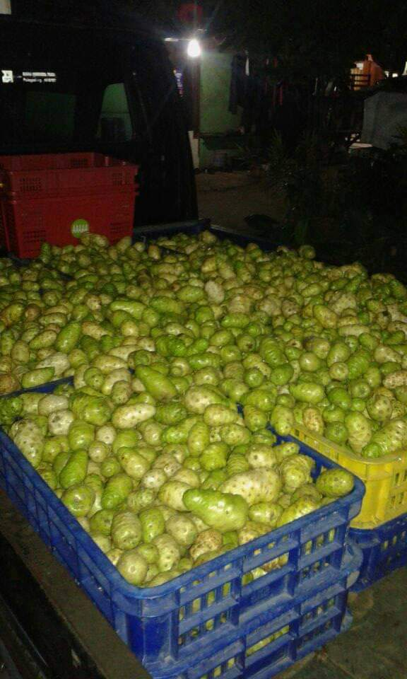 Fresh and Dried Noni