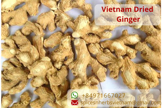 Vietnam ginger export products