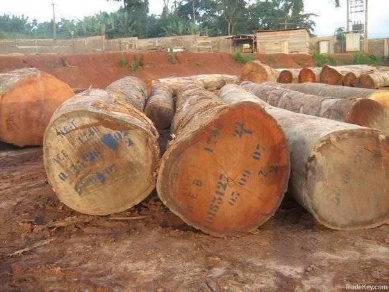 Timber logs In Cameroon (00237697657673)