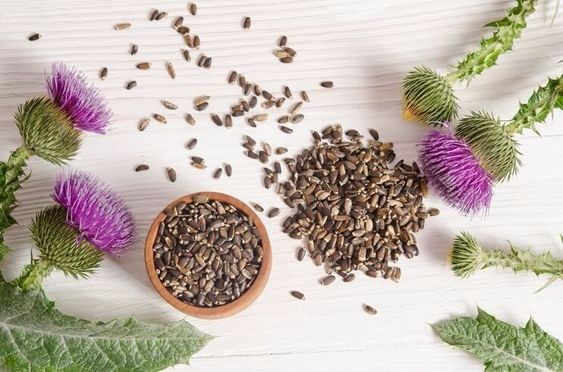 Dried Milk Thistle Seeds Extract Powder