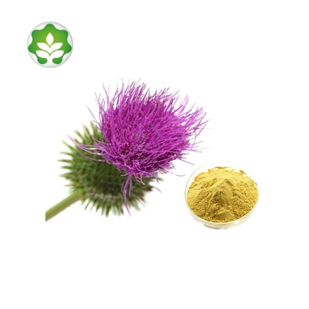 dried milk thistle seeds extract powder liver support in energy drinks