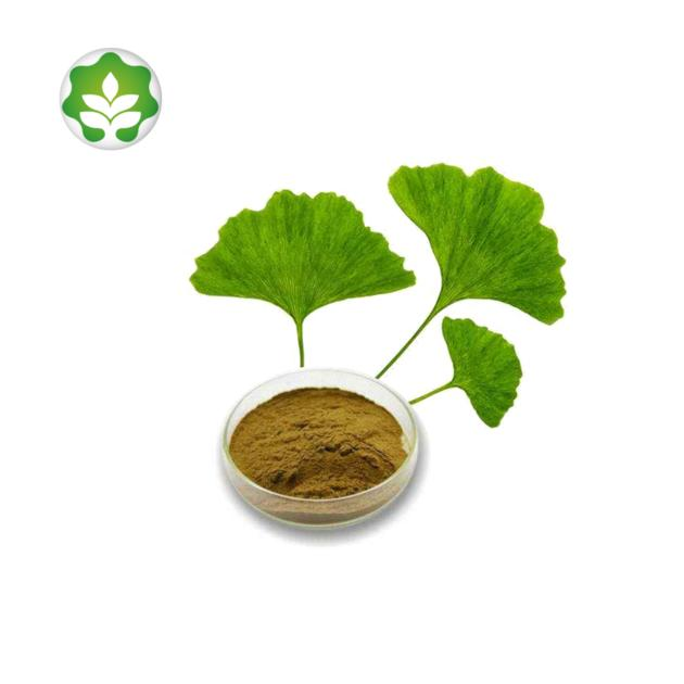 life extension ginkgo biloba extract powder healthcare products